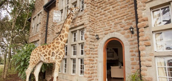 giraffe-manor-9
